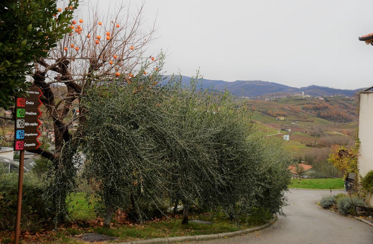 Wandelen in Goriska Brda,Slovenie